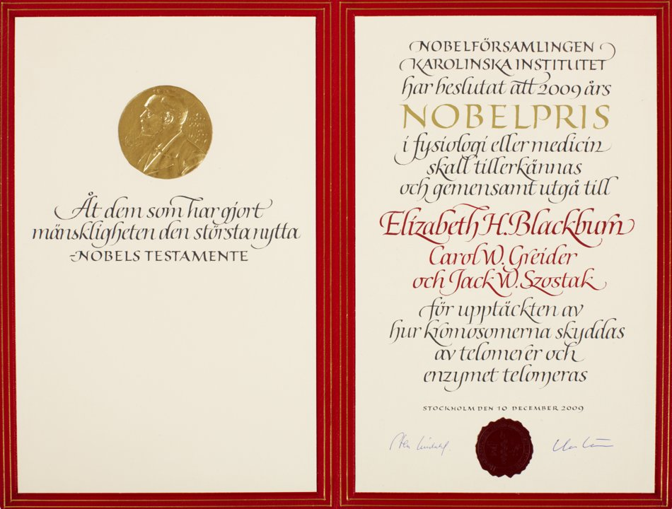 Elizabeth H. Blackburn - Nobel Diploma