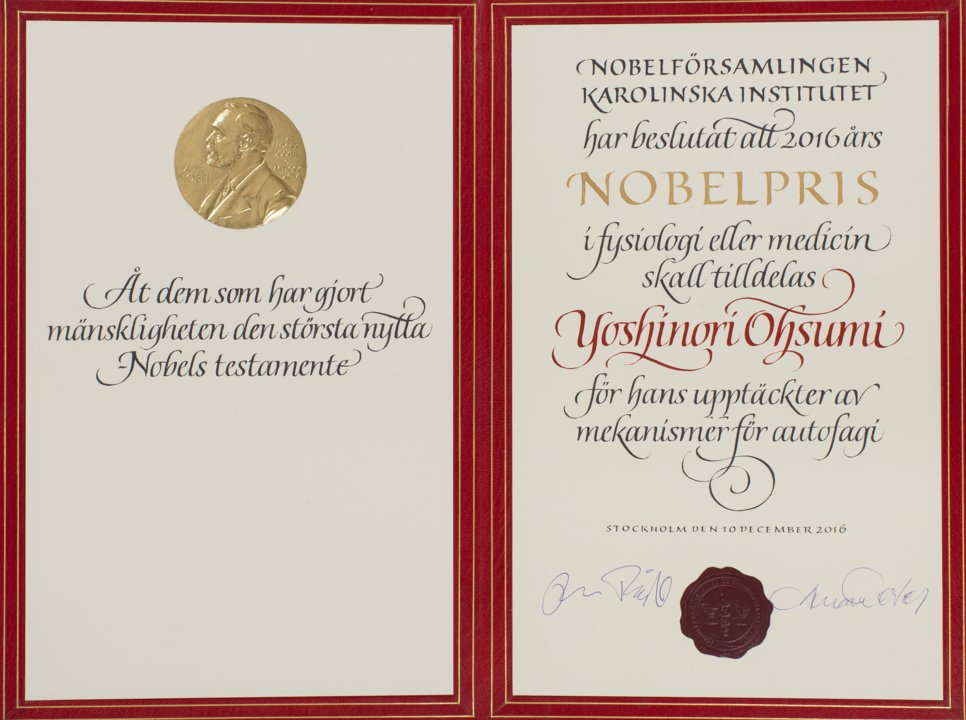 Yoshinori Ohsumi - Nobel Diploma