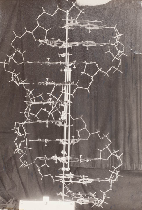 Original model of the structure of DNA, 1953