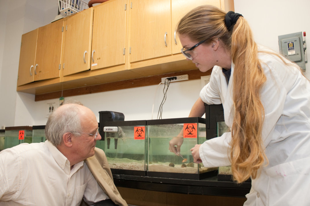 Bert Sakmann watches a student demonstrate how to  extract venom from a marine snail