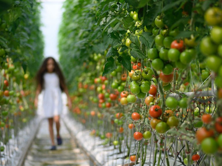 Girl in a tomato green house