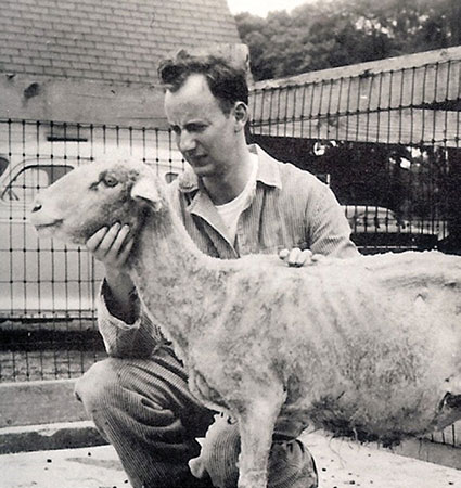 Holding an infected sheep.
