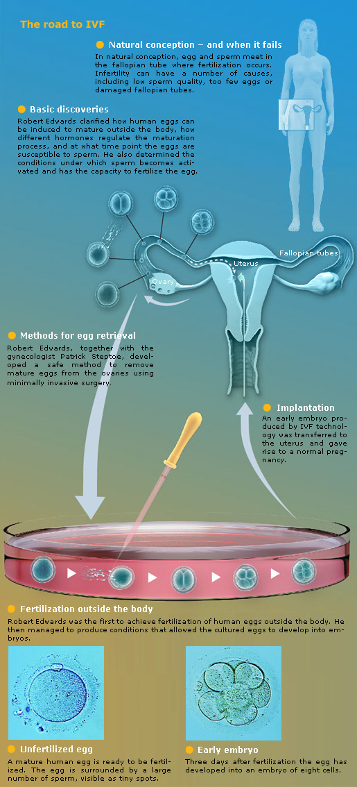 The road to IVF