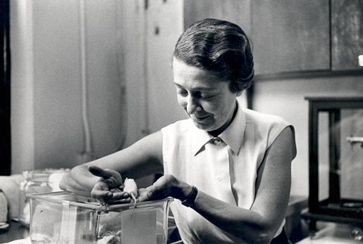 Rita Levi-Montalcini in her laboratory