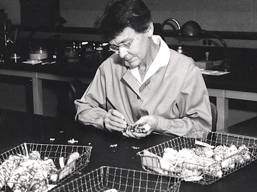 Barbara McClintock in the lab at Cold Spring Harbor