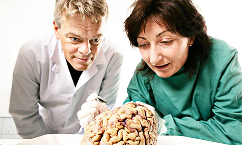 May-Britt Moser and Edvard I. Moser studying a brain. Photo: Geir Mogen/NTNU.