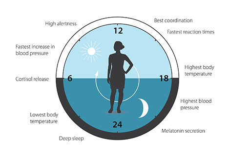 The circadian clock