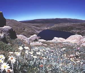 Australian nature