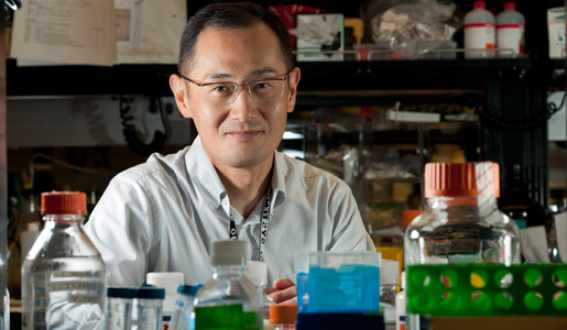 Shinya Yamanaka in his laboratory
