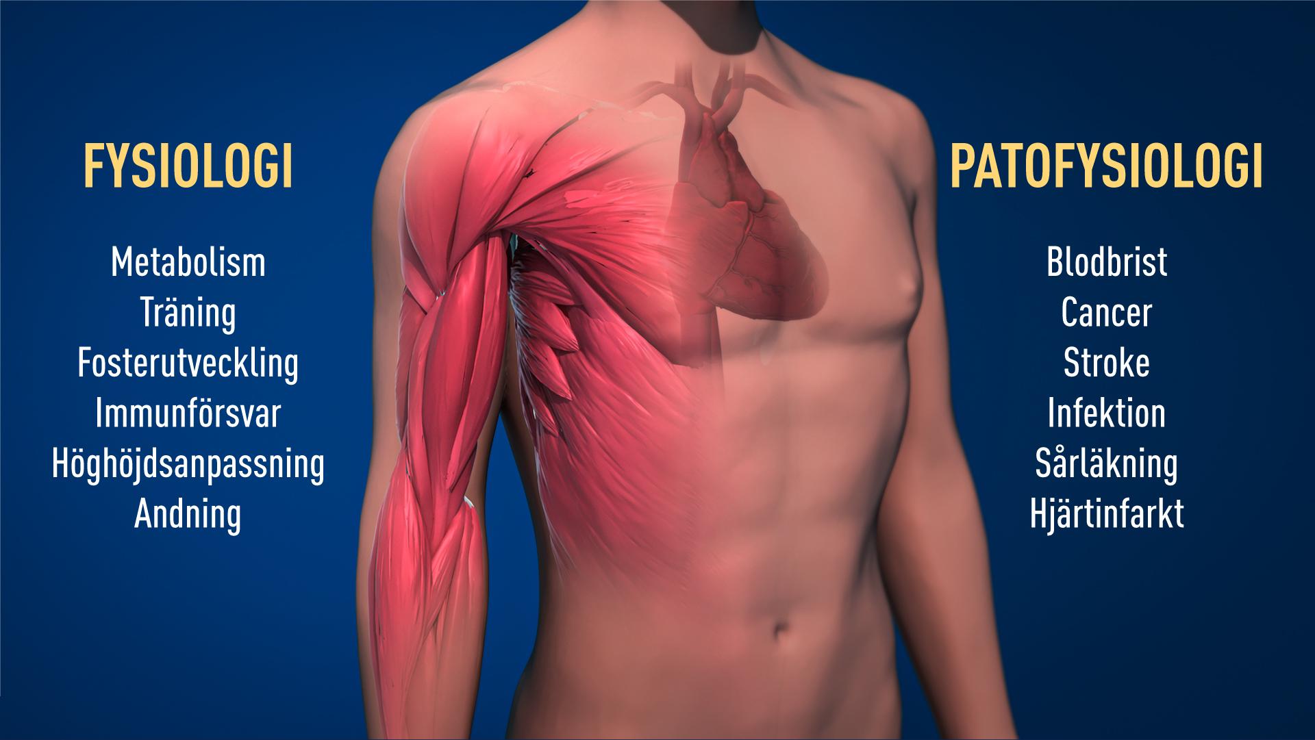 Patologiska processer
